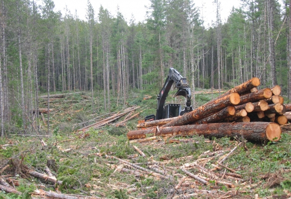 coast logging