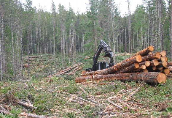 coast logging